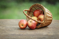 Gala apples in a wicker basket Royalty Free Stock Photography