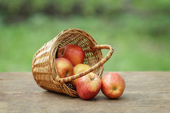 Gala apples in a wicker basket Stock Photo
