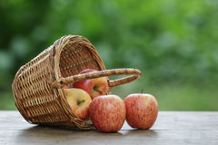 Gala apples in a wicker basket Stock Images