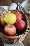 Gala and Golden Delicious apples in a basket. Healthy snack. Gala and Golden Delicious apples in a basket. Healthy snack for children. Favourite fruits. View Stock Images