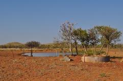 Galahs в дереве рядом с пустыней захолустья водопоя австралийской Стоковая Фотография RF