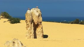 Galahs encima de un pináculo en Australia occidental almacen de metraje de vídeo