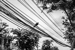 Galandehängning på till elektrisk kabel fotografering för bildbyråer
