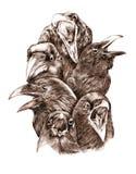 Galanden och ravens Arkivfoton