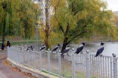 Galanden som håller ögonen på sjön royaltyfria bilder