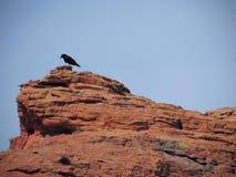 Galandet av klippan i ökenpanoramautsikter från att fotvandra skuggar överst runt om St George Utah runt om Beck Hill, Chuckwalla Royaltyfri Foto