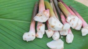 Galanga, mayor Galangal, hierba de Tailandia tiene propiedades medicinales y los ingredientes el cocinar, fotos de archivo libres de regalías