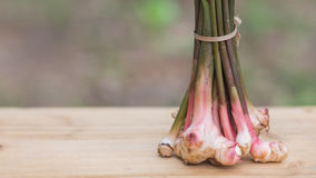 Galanga, mayor Galangal, hierba de Tailandia tiene propiedades medicinales y los ingredientes el cocinar, Fotos de archivo