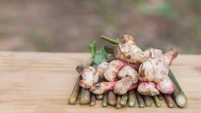 Galanga, mayor Galangal, hierba de Tailandia tiene propiedades medicinales y los ingredientes el cocinar, fotografía de archivo libre de regalías