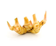 Galangal Royalty Free Stock Images