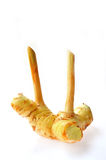 Galangal Stock Images