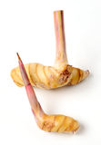 Galangal Stock Photography