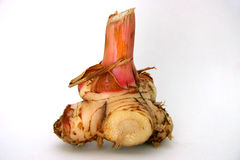 Galangal (Blue Ginger) Stock Images