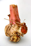 Galangal (Blue Ginger. Plant root in the ginger family Royalty Free Stock Photo