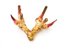 Galangal or chinese ginger. royalty free stock photography