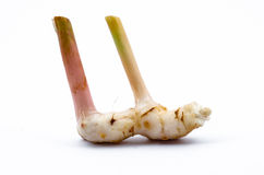 Galangal Isolated. Over White background Royalty Free Stock Photography