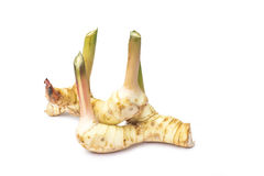 Galangal isolated on white background Stock Images