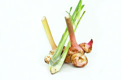 Galangal and Lemon Grass Stock Photo