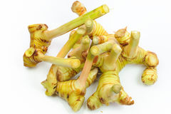 Galangal roots Royalty Free Stock Images