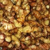Galangal rouge, toujours une famille avec du gingembre et safran des indes photo stock
