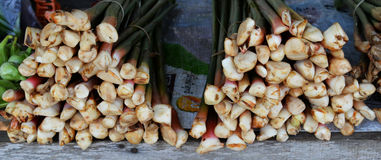 Galangal for Sale Royalty Free Stock Images