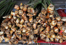Galangal for Sale Royalty Free Stock Photos
