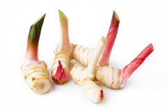 Galangal. On a white background Royalty Free Stock Photo