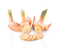 galangal on white background Royalty Free Stock Images