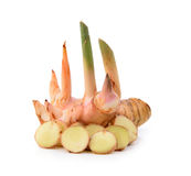 Galangal on white background Stock Image