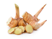 Galangal on white background Royalty Free Stock Photos