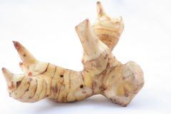 Galangal whole Royalty Free Stock Image