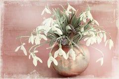 Galanthus nivalis Stock Photos