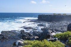 Galapagos öar Arkivfoto