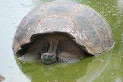 galapagos żółwia Zdjęcia Stock