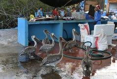 Galapagos αγορά ψαριών στοκ εικόνες με δικαίωμα ελεύθερης χρήσης