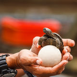 galapagos ο γίγαντας Στοκ εικόνες με δικαίωμα ελεύθερης χρήσης