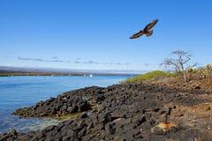 galapagos τοπίο Στοκ Εικόνα