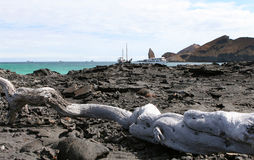 galapagos τοπίο στοκ εικόνες