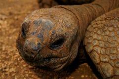 galapagos χελώνα Στοκ εικόνες με δικαίωμα ελεύθερης χρήσης