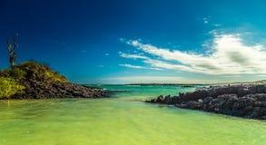 galapagos Fotografia Stock
