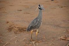 Galapagos bird royalty free stock photo