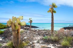Galapagos coast Stock Photos
