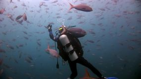 Scuba divers underwater on background of school fish. Galapagos, Ecuador - 17 May 2008: Scuba divers underwater on background of school fish. Unique beautiful stock footage