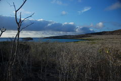 Galapagos fields. Sea shore in one of Galapagos' coasts Stock Photography