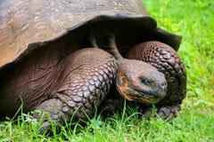 Galapagos giant tortoise on Santa Cruz Island in Galapagos Natio Stock Photos