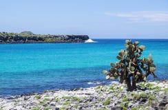 Galapagos Isalnds  1 Royalty Free Stock Photo