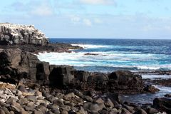 Galapagos islands Royalty Free Stock Photography