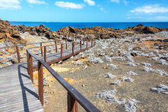 Galapagos Islands Boardwalk. Boardwalk passing through Bartolome Island in the Galapagos Islands stock images
