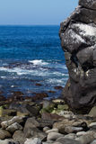 Galapagos Islands Seascape. Looking out across rocky upgrowths royalty free stock image