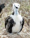 Galapagos Islands Royalty Free Stock Photos
